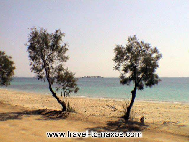 TREES ON THE BEACH - Trees on the beach of Plaka in Naxos